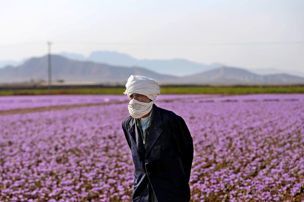 Iranian-Saffron-Farm-Tour-3